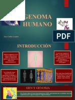 410465884-GENOMA-HUMANO-pptx.pptx