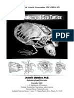 Antomy of Sea Turtles.pdf