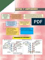anticuerpos y antigenos