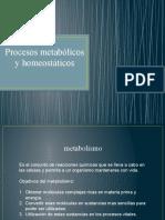 (11) Homeostasis, enzimas, avances cientificos.pptx