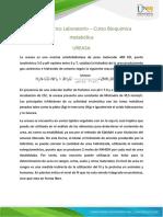 Marco Teorico Laboratorio Curso Bioquimica Metabolica