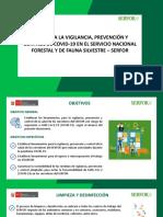 PLAN-SECTOR-FORESTAL.pdf