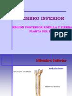 M.I.- PIERNA POST. PLANTA PIE-