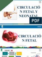 Circulación fetal.pptx