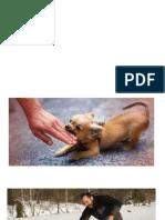 clase rabia y araniazo de gato [Autoguardado]