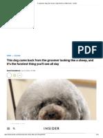 A Japanese dog salon made a dog look like a fluffy sheep - Insider