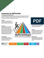 Anatomia de Piramide Alimenticia