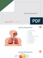 sistema respiratorio9