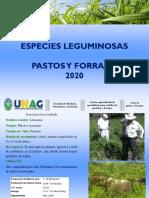 PRESENTACIÓN. LEGUMINOSAS-PASTOS Y FORRAJES-2020 (1)