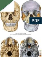 anatomia_de_la_cara_y_cuello[1].pdf