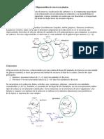 Teórica de Hidratos de Carbono 2