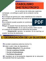 8.- METABOLISMO HETEROTROFO.1