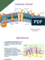 Membrana+