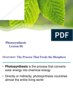 06_Photosynthesis
