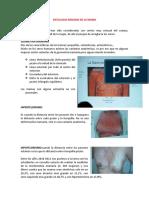 Anatomia y semiologia de la mama