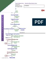 Taller 1 GLUCOLISIS ck fermentac y FosFoxi.pdf