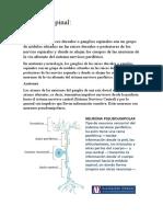 Ganglio Espinal expocision biologia