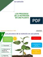 2CN_26_3P_procnutriplanta