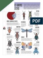 Lamina Principales Grupos De Los Insectos.pdf