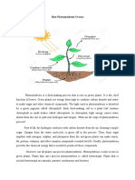 How Photosynthesis Occurs (Explanation Text)
