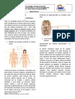 ACF2020_GUIA SISTEMA ENDOCRINO _8_ciencias Naturales _2periodo_JAguilar