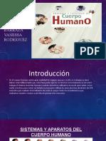 TRABAJO DE TEJIDOS Y ORGANOS DEL CUERPO HUMANO (4)