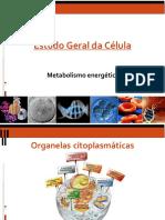 metab energ - VU 2020.pdf