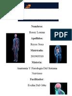 Anatomía y Fisiología del Sistema Nervioso 7