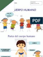 cuerpo humano.ppt