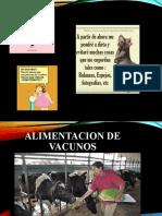 ALIMENTACION DE VACUNOS