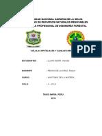 ANATOMIA ALONDRA.docx