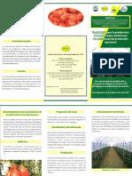 Tecnologia para la produccion de tomate, 2011