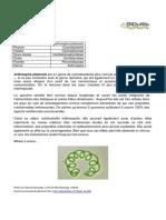 arthrospira_platensis.pdf