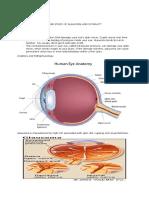 GlaucomaCaseStudy.docx