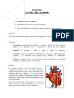 5. Sistema Cardíovascular.pdf