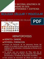 6 Obs Celulas_sanguineas