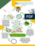 infografia fitopato.docx