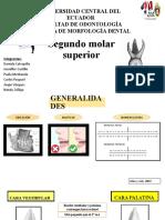 SEGUNDO MOLAR SUPERIOR COMPLETO EXPOSICION.pptx