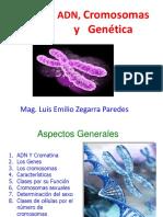 ADN, CROMOSOMAS Y GENETICA