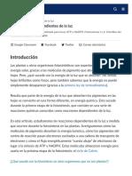 REACCIONES DEPENDIENTES DE LA LUZ FOTOSINTESIS
