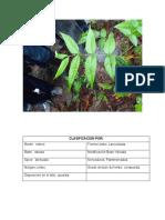 clasificacion de los hojas.docx