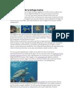 Evolución de la tortuga marina