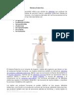 Material de apoyo sistema endocrino