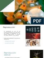 Reproducción.pdf