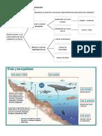Los ambientes acuáticos y de transición