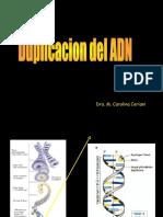 Duplicacion del DNA 2017