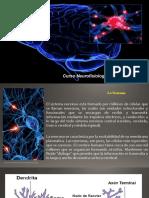 ES1_Neurona