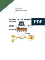 30ma clase. Potencial de membrana. 19-07-18 Prof. Pedro Pieruzzini. Maria Gabriela Pino y Darwin Plaza.pdf