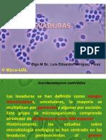 CLASE DE LEVADURA