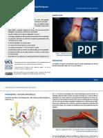 Olivier Barbier_Traumatismes des nerfs périphériques.pdf